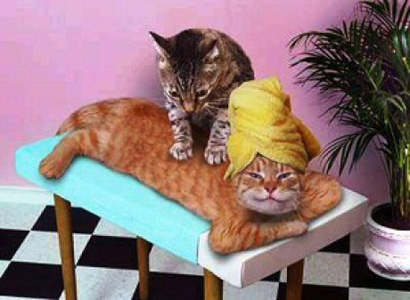 funny-cat-picture-relaxing-cats